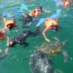 Estudiantes CCOM promueven campaña ecoturística en El Ñuro